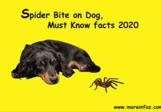Spider Bite on Dog